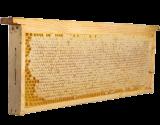 СОТОВЫЙ мёд в рамке (за 1 кг)
